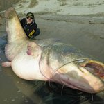 ICYMI: An Italian fisherman catches a monstrous catfish that weighs in at 280 pounds! » http://t.co/7Q5xeXyFct http://t.co/5lnSmELlMi