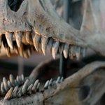 Los dinosaurios ya se drogaban hace 100 millones de años. Te contamos cómo http://t.co/ky8TcdMc5B vía @cienciaxplora http://t.co/DPrzoNGbeC