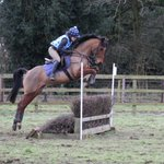 PLS RT: For Sale 15.2hh rising 5yo gelding. Fantastic paces, bold scopey jump. Real head turner fit and ready to go! http://t.co/OktPmcdyVB