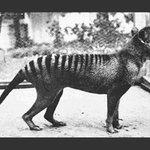 #Fotogalería | Los 10 animales extintos a lo largo de los años. http://t.co/yi0cJ0wkDd http://t.co/kRMD9GrGPc