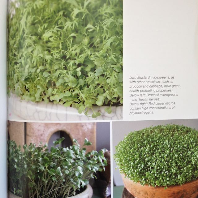Look at the luscious images in Fionna Hill's book, Microgreens. #groundchat http://t.co/kfnb1vnRjh