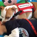 Niño discapacitado y su perro ganan batalla para asistir juntos al colegio → http://t.co/jSZiMjBLsz http://t.co/9HYVuEhZ45