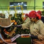 Comercio de #México con #Ecuador se quintuplica http://t.co/nxFi8TqTl1 #Economia http://t.co/AdHkS6w1iV