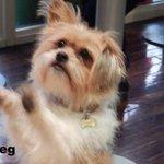 #happydog #isitok http://t.co/aByOzSMDlz