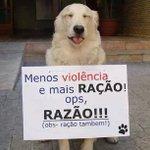 Agressão a animais pode render multa, segundo projeto de lei de Niterói. http://t.co/mzUX26diNO http://t.co/FTusHzgxmQ