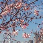 【New】春の花粉は爆発的な飛散量に? 3カ月予報 http://t.co/depAZGXQL3 http://t.co/Z5tfFwMa4K
