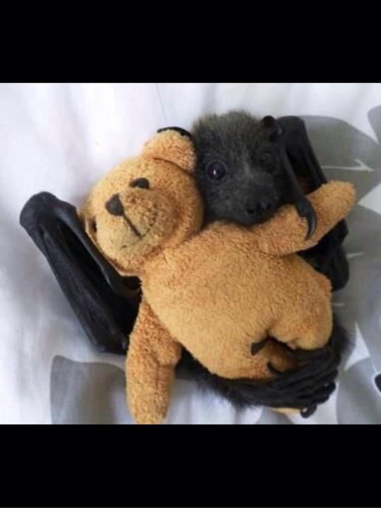 There are not nearly enough baby bats on Twitter. http://t.co/V4Vnp8I7Ln