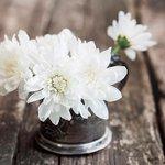 【これはすごい】花瓶にバイアグラを入れると… http://t.co/7jpx9asvJw 花の寿命を最大1週間伸ばせることが分かった。 ネットでは「1週間も立ったままなら、植物学者に相談すべきだね」などの声も。 http://t.co/JEJ3Zhb5YM