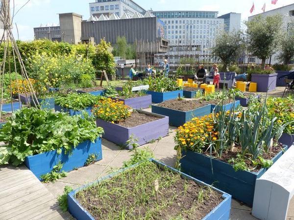Geen tuin en toch #groenten kweken? Denk dan eens aan #stadslandbouw op daken @ArthurKalkh @HvPaassen @HSchouffoer http://t.co/qj3wL14XKZ