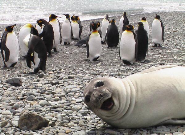 Best Photobomb Ever! http://t.co/5nyiiUHhjV