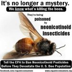 RT @GMWatch: Bayer's contributed to countless bee deaths around the world. Tell them to stop the killing! https://t.co/NmYGyIEiep