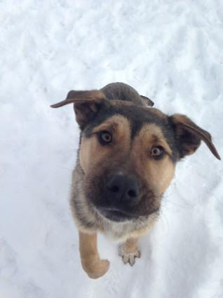 #AdoptionEvent: Meet Huff & Picton today at Sadie's K9 Stay&Play on Argyll Road, from 12-3 #yeg #adopt http://t.co/KFZswY9XgI