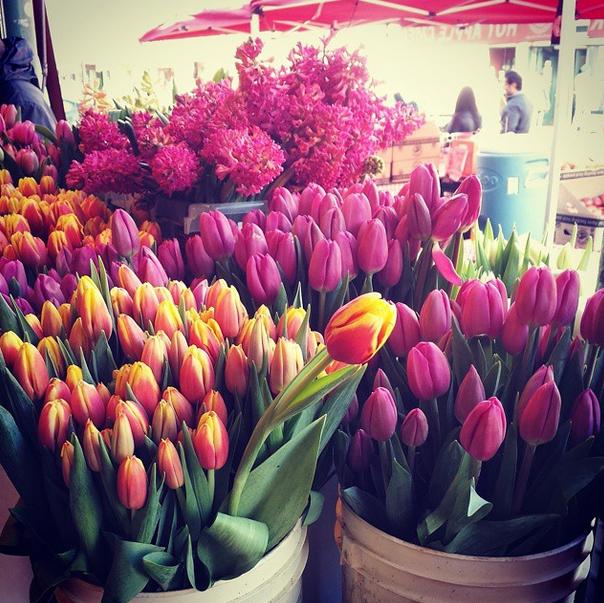 Gorgeous flowers in @pike_place market! #Seattle #visitseattle http://t.co/vvS3zsfDU7