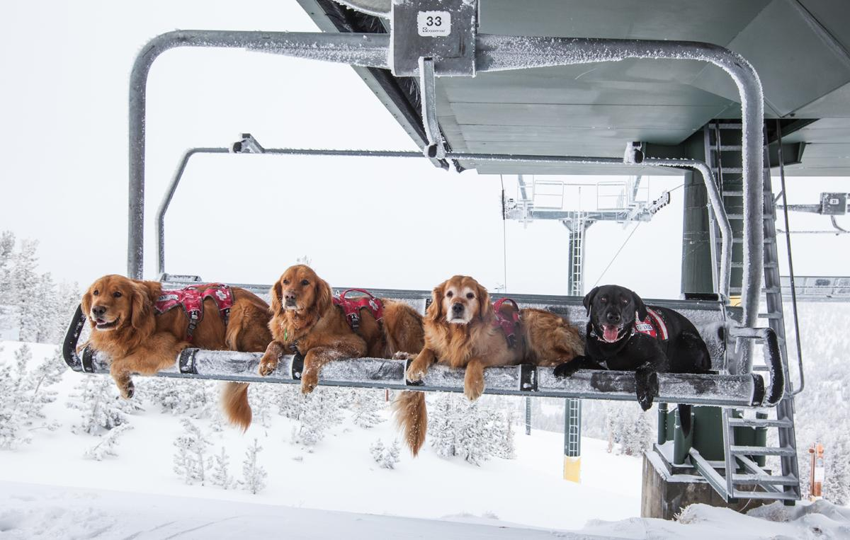Dogs love powder days too! http://t.co/33pZwPwELa