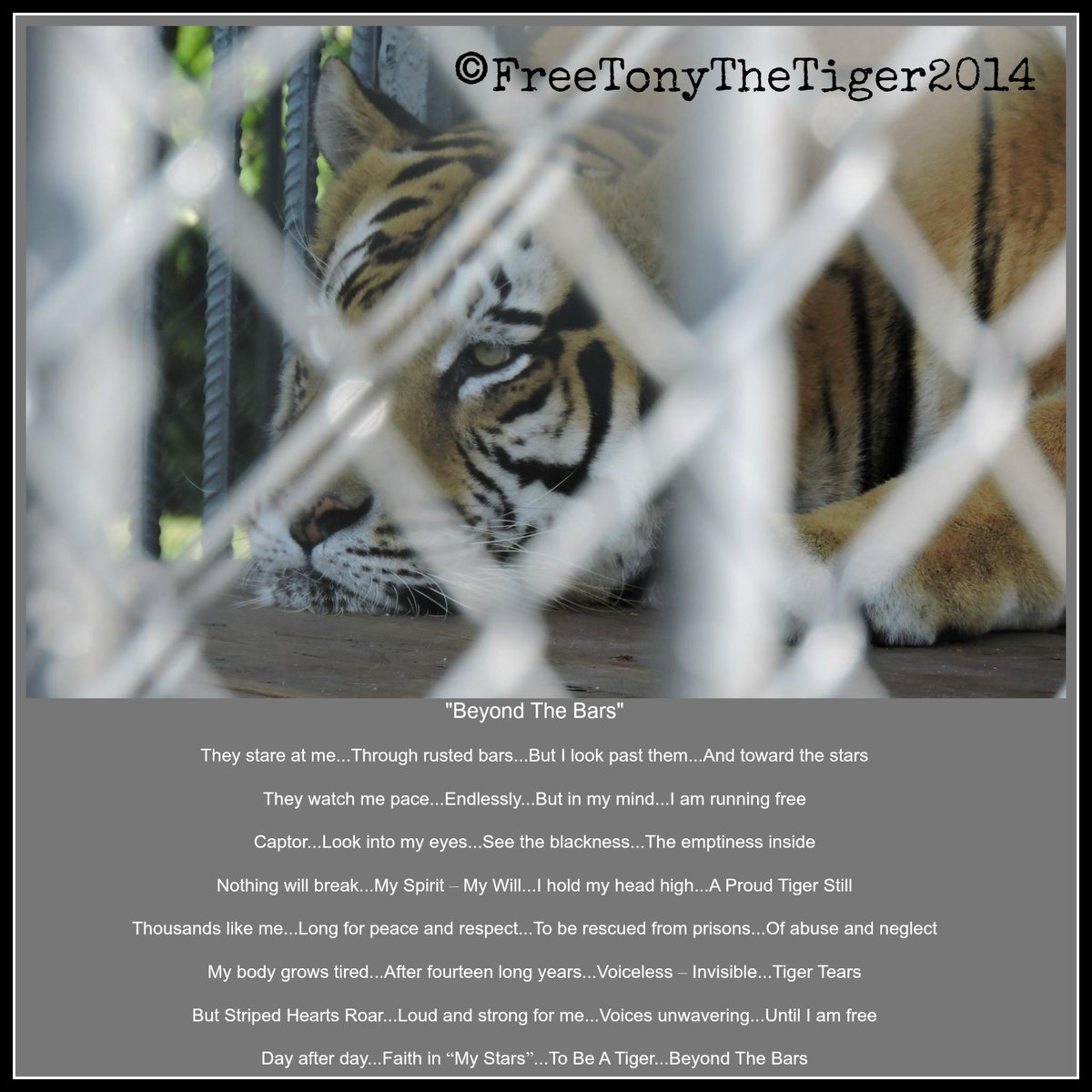 HEY!! Tiger Truck Stop Man!! You Don't Own Me ... & #Tigers DON'T Belong At Truck Stops!! #FreeTonyTiger http://t.co/v3hx3mO6E0
