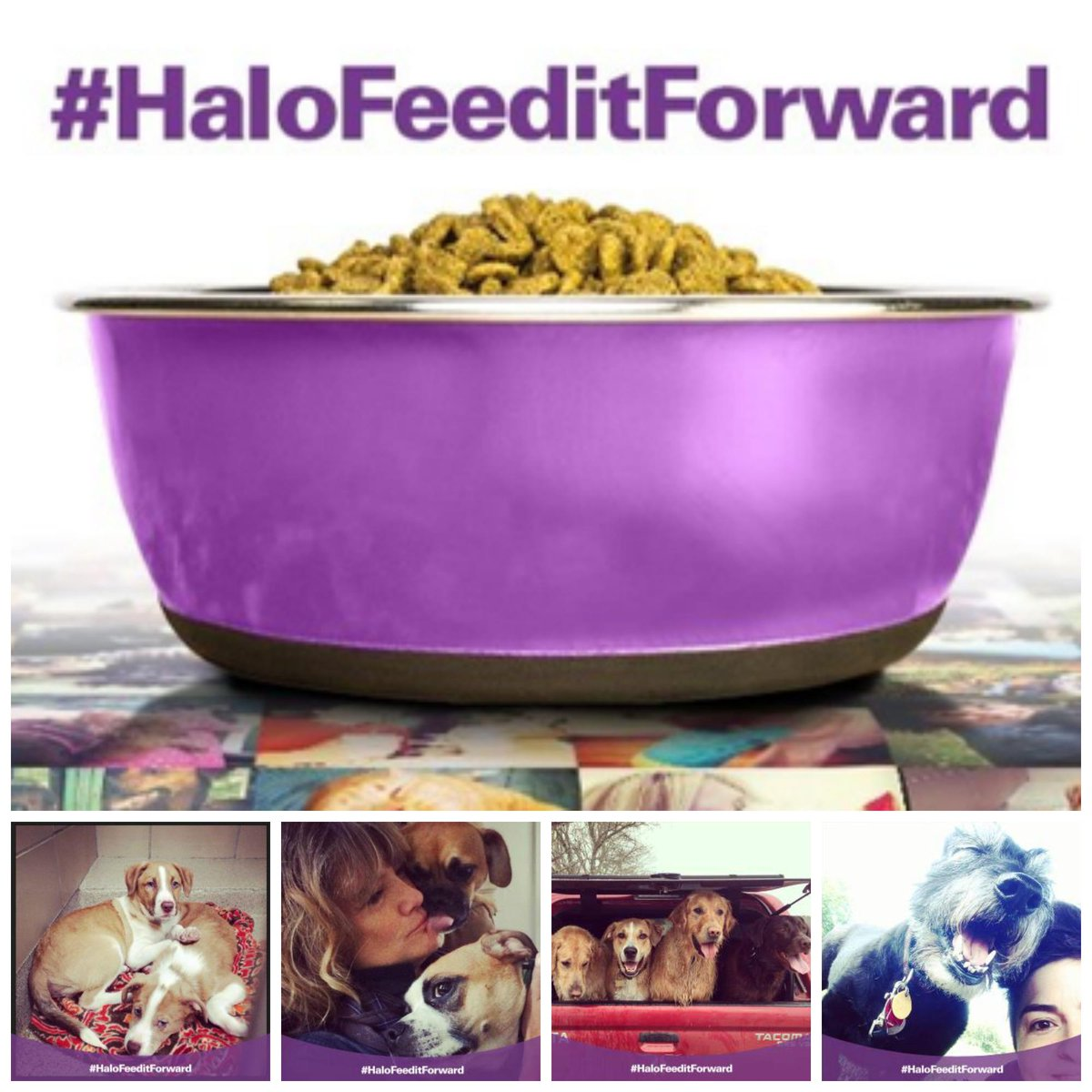 #Feed a #shelterpet for #FREE today by sharing a #pet picture with #HaloFeedItForward! #SocialGood http://t.co/9gpclYcdbk