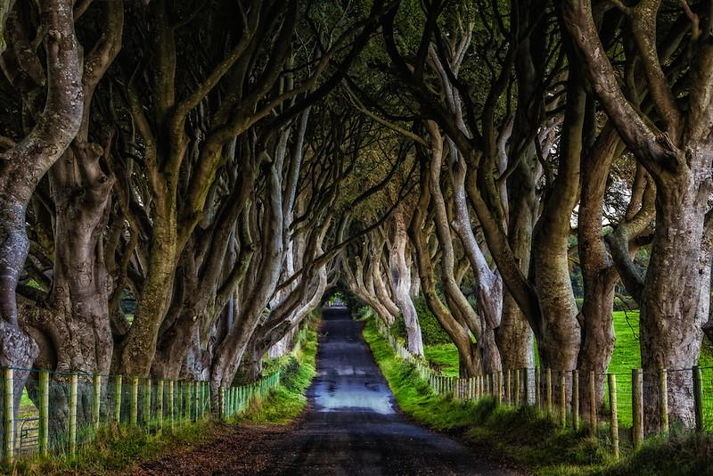 Have you been? The Dark Hedges of Northern Ireland