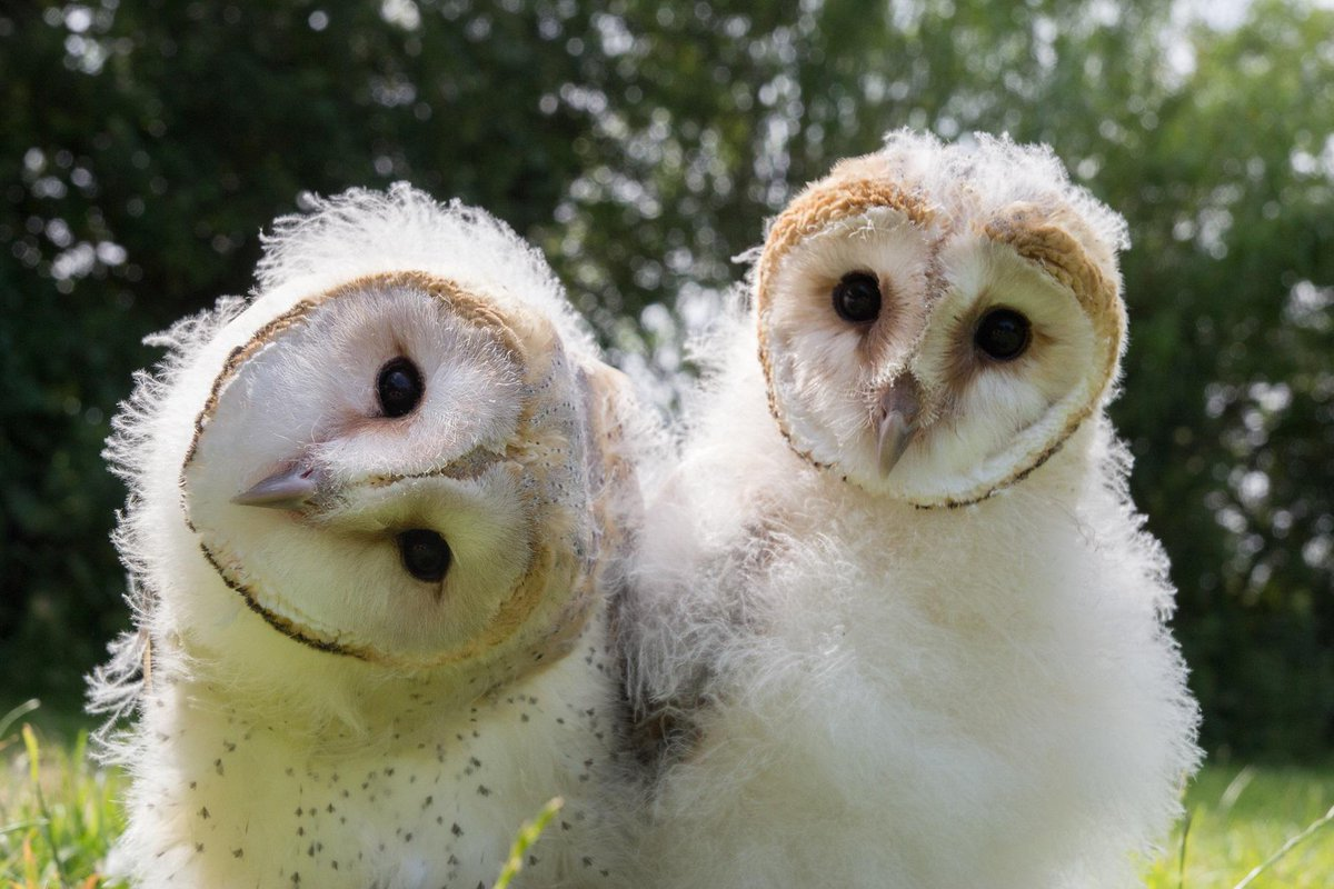 Learn how owls are inspiring modern innovation. Owl Power on @PBSNature, Wed. 2/18 at 8pm http://t.co/HSGwRxjmVY