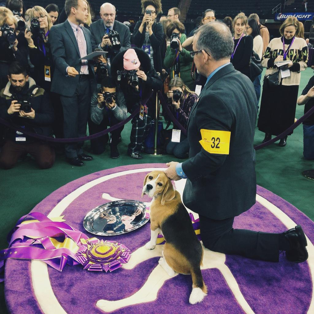 """So this is my life now?"" - Miss P #WKCDogShow http://t.co/Pi0QbA9vOB"