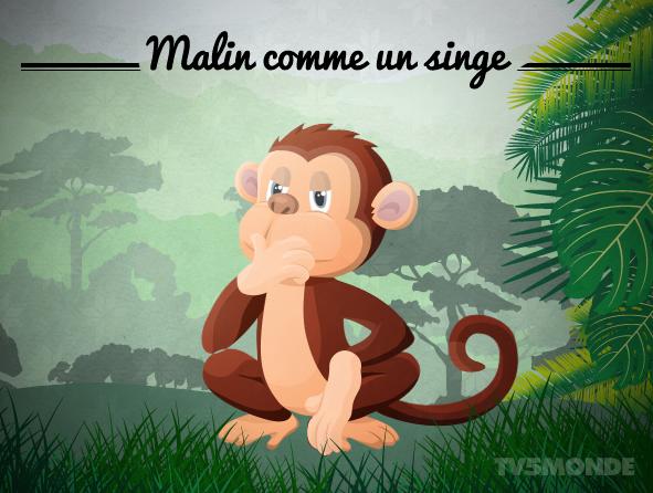 """[フランス語表現 - 動物]  """"Malin comme un singe""""  直訳:サルのように悪賢い。 意味:大変ずる賢いこと、抜け目のないこと。 http://t.co/NWeZ7dGqj4"""