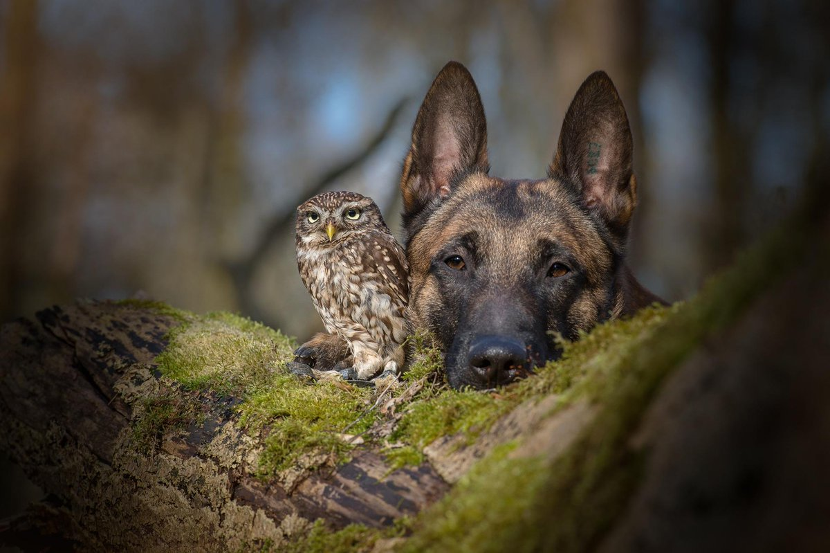 The Incredible Bond Between a Dog and an Owlet https://t.co/Hcx8u2mrjC http://t.co/5c8lbobmMA