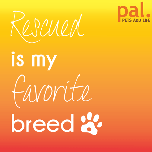 Rescued is our favorite breed! RT if it's your favorite too. http://t.co/WaYRFSqcEv
