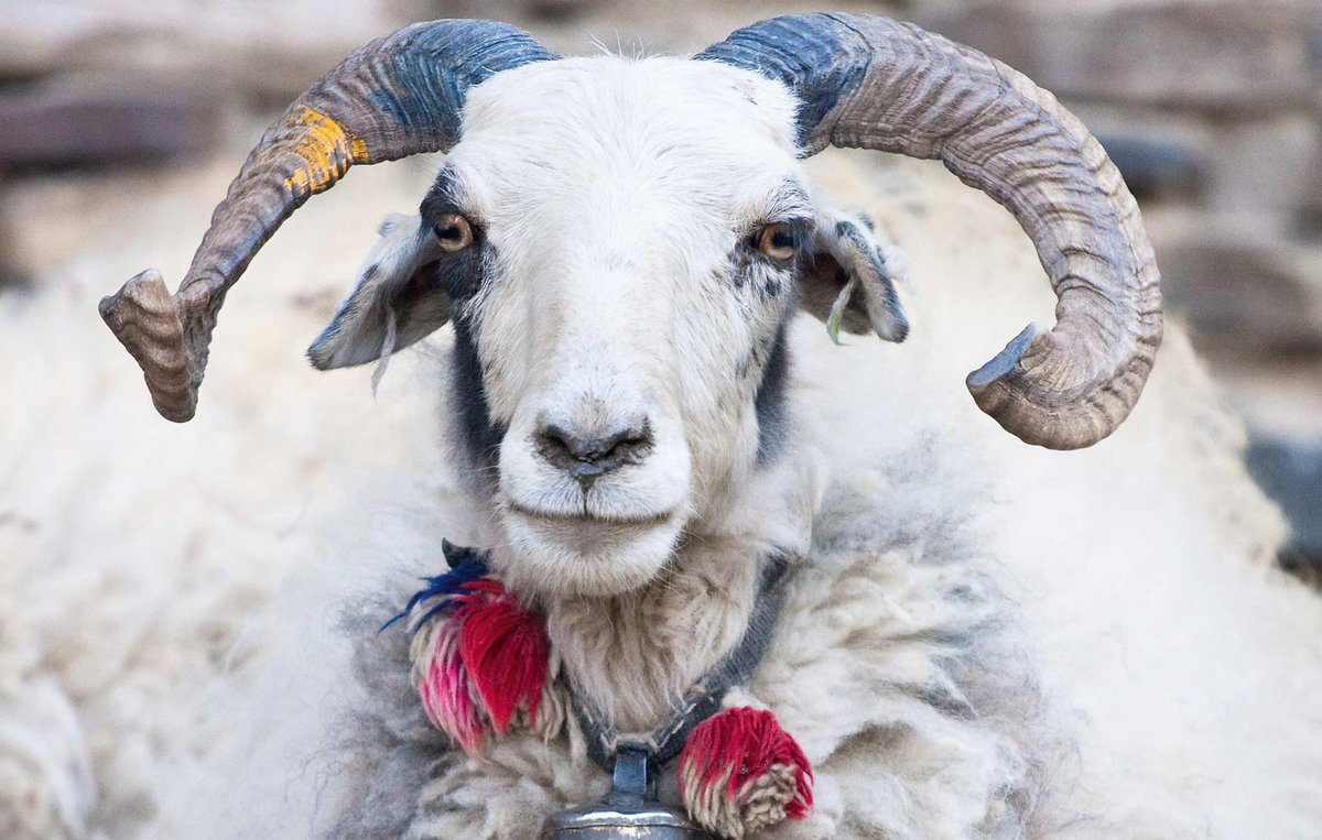 Happy Tibetan New Year, May Your Losar & Year of the Wood Sheep Be Full of Joy! ༄༅།།ལོ་གསར་ལ་བཀྲ་ཤིས་བདེ་ལེགས་ཞུ http://t.co/Ff4f7dgds7