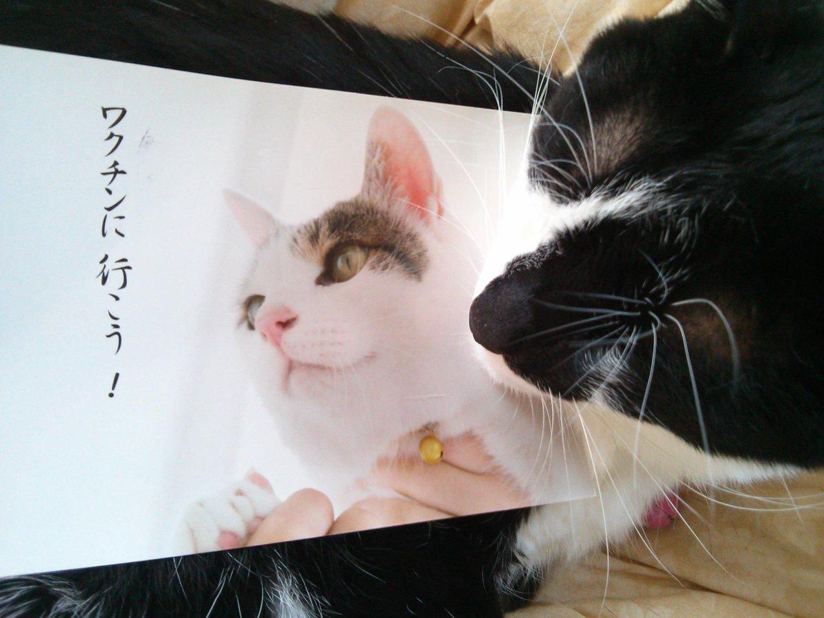 大事なことだから今日も呟くにゃ。寝不足は万病のもと猫不足も万病のもとニャ。誰も信用しないけれど本当にゃ。とにかく動物不足はダメにゃ~。 http://t.co/lFYy5jLFD7  #猫充  #neko #cat #猫 http://t.co/xKiOeV4LCy