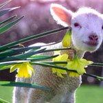 1 maart, start vd meteorologische #lente! 20 maart begint de astronomische lente http://t.co/27FpJdN9Bn