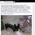 """¡Se busca! perrita blue heeler extraviada #saltillo RT ..PORFAVOR Vía @ale_guajis http://t.co/DiSwZjO1XI"""""""