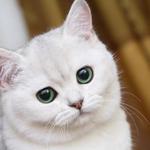 1 марта - День кошек http://t.co/lYWtrgXhj7