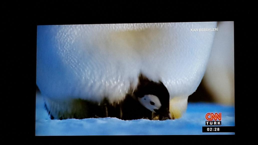 Yalnız şu an Cnntürk'te cidden penguen belgeseli var. http://t.co/W1z2XIeSuC
