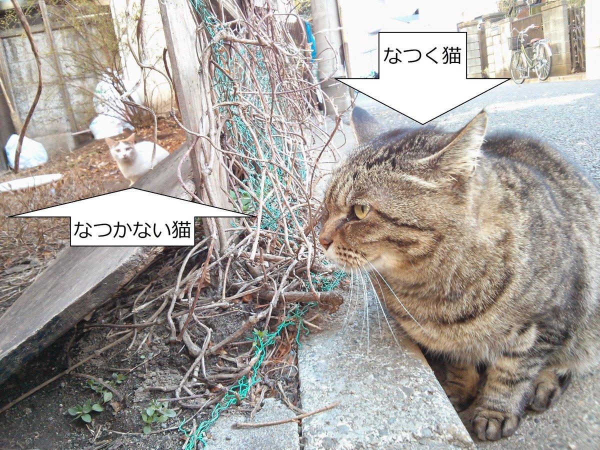 今日は猫の日だから猫屋敷をレポートする次第。猫屋敷の猫に「飼い猫ですか?路地猫ですか?」と訊いてみたけれど、回答は無かったんだな。それでも今日は猫充でハッピーなんだな('◇')ゞ http://t.co/pJKWBR3Qo8 http://t.co/J5NhrZ1gli