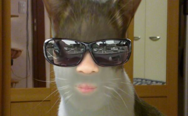 Ryuskの家のシャム猫 http://t.co/3WXgN5FUnf