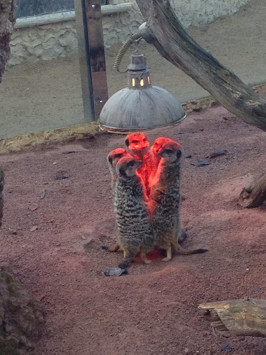 Meerkats do 'Prometheus Egg Hatching'. RT @BuzzFeedUK: http://t.co/IDrNTB8dLg http://t.co/Ou1H8taRlt