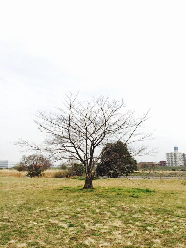 ふたりの間のサクラ、咲いたらまた来るからね(ノД`)     記念樹だった  東方神起 サクラミチ http://t.co/WQ6ayi1lnC