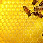 """@RaiExpo: Cosa impariamo dalle api?  http://t.co/YQuwdL9i9Z http://t.co/YxHPQhBKOe"""