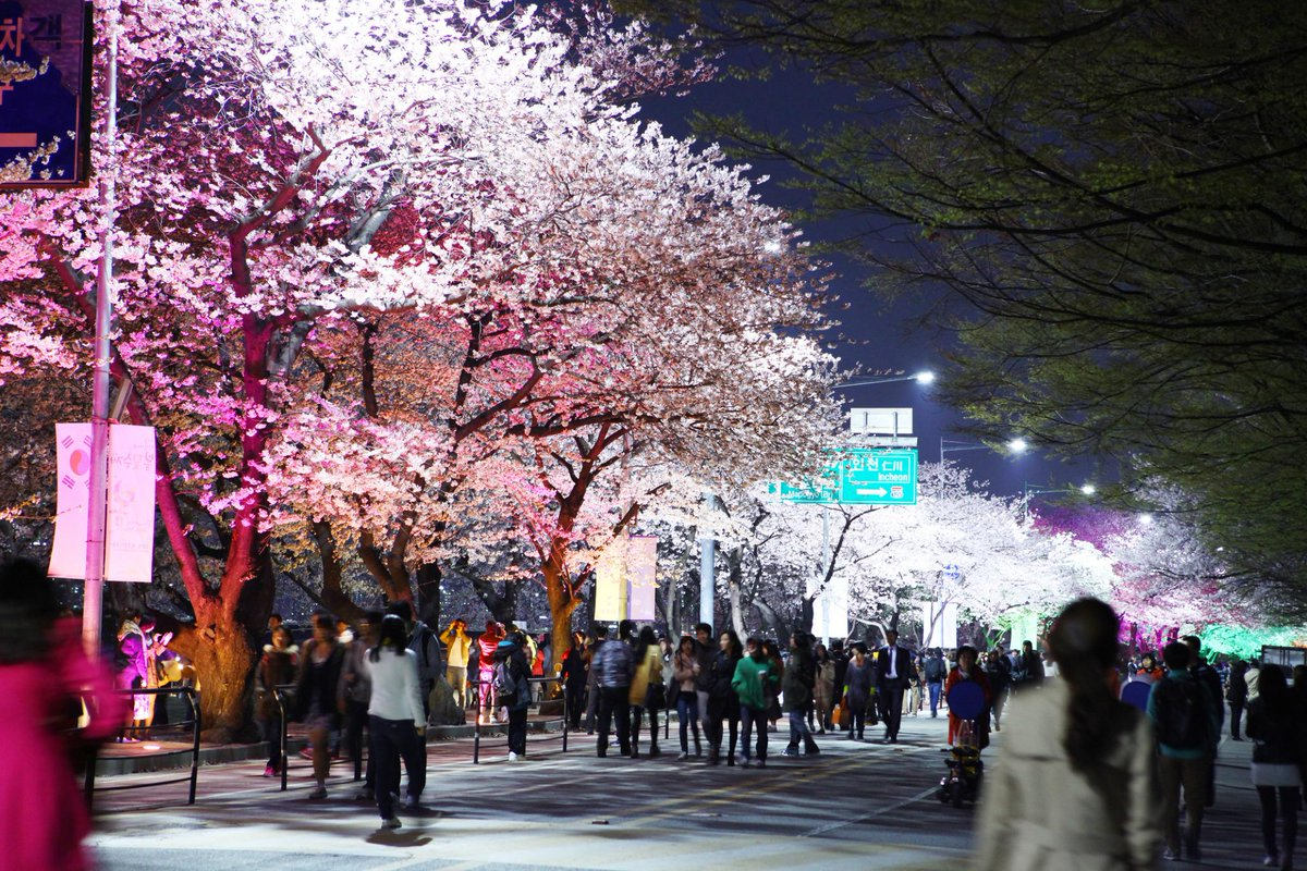 Yeouido cherry blossom festival by night. It'll take place this April. Stay tuned! http://t.co/NHxuyixiNg