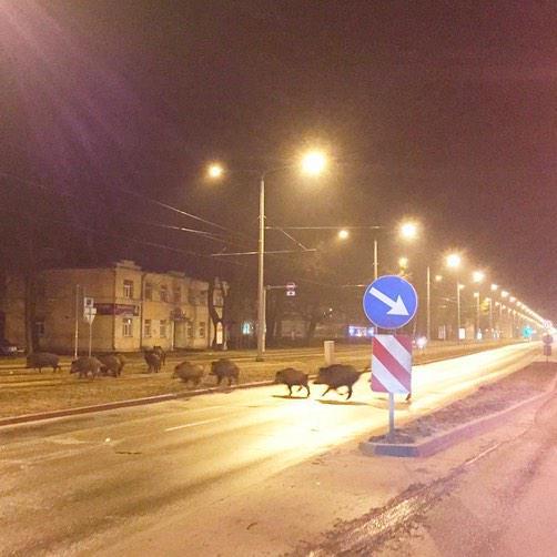 Rīgā šonakt beidzot noticis patiešām iespaidīgs un iepriekš neizziņots flashmob MT @KancaneLiva Tā ir Brīvības iela.. http://t.co/eRePLFIRx3