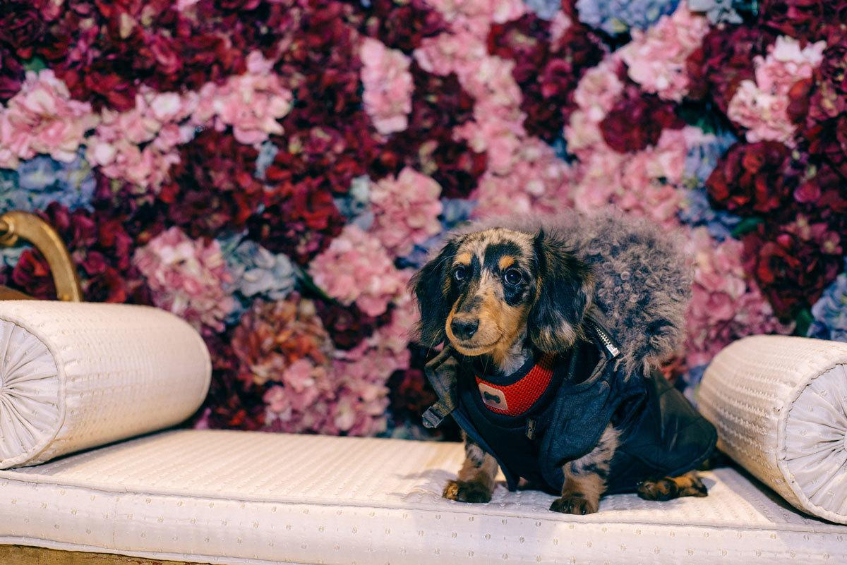 Frankie the Frankfurter at LFW wearing @EthologieLondon at the @BeautifulSoulxx installation @VICE  #fashionmelondon http://t.co/RgHZVm1wMC