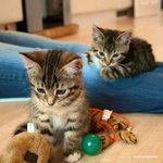 Image of kittens from Twitter