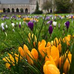 Its a bit grey in Exeter this morning. Luckily our St Lukes Campus is full of early spring colour. http://t.co/6xhm7Kuxk9