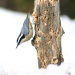 Get outside this wknd! Take a #bird walk w/ the #Toronto Ornithological Club http://t.co/UNcoJeqkXH http://t.co/KAmafsQSaS