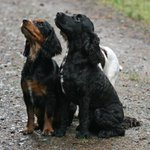 Theyve arrived - our regular #DogHomeBoarders Lucy & Chester for their holiday! Woof Woof #Dogs #NorthwalesTweets http://t.co/uLzqKNb012