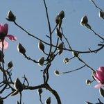 Trebah Garden - Latest