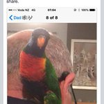 Hey #chch folks see this picture...can pit you in contact if you know who owns the bird #halswell #lostpets http://t.co/e55RxHjGb5