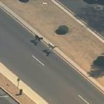 LIVE (and not a joke): Llamas on the loose in Sun City, Arizona: http://t.co/9Jn3OvdzfC #weirdnews #fox5dc http://t.co/yU0YZxDdyw