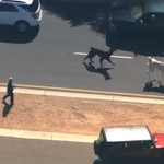 Llamas on the loose in Phoenix, Arizona — Livestream via @abc15 http://t.co/7hvAsxhcmN http://t.co/goJuzJIfkN