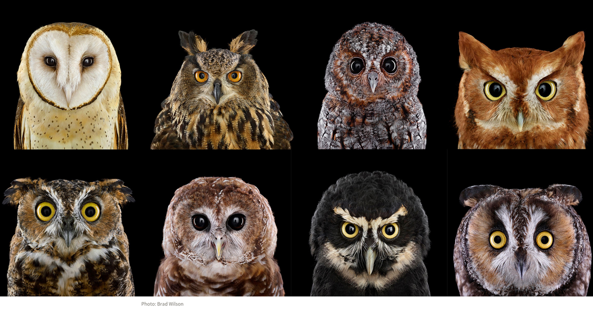 Whooo loves owls? http://t.co/0daYEMB644 http://t.co/RQD2YPAAQ9
