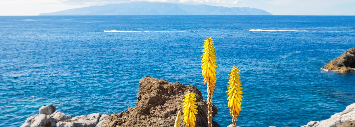 Fly Ryanair to Tenerife to witness lazy beaches, majestic mountains, diverse landscape.
